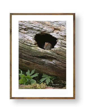 Skogssork i stubbe A2 storlek