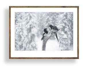 Skator i snö A3 storlek